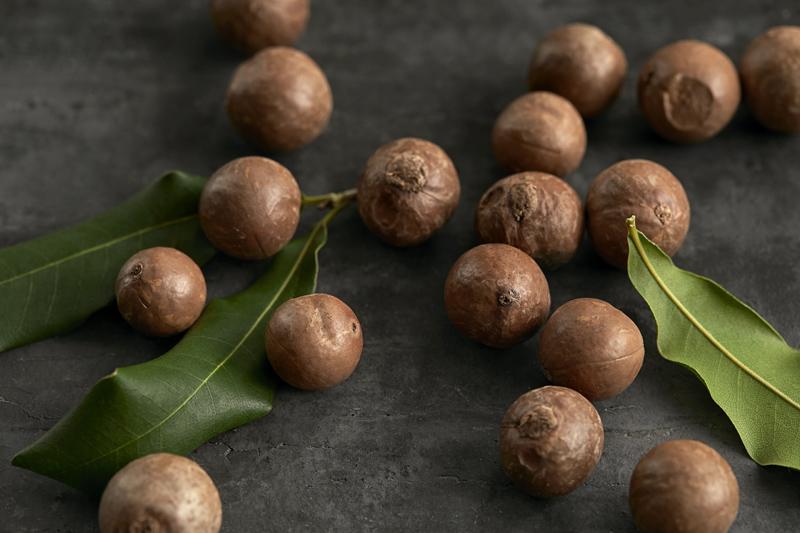 シアバターを採取する種子、シアナッツ